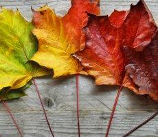 7 помилок, які ускладнюють впровадження змін у компанії