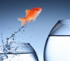 Ротации сотрудников: виды, выгоды и риски